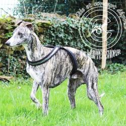 Harnais-petit-lévrier-italien-Harnais italian-greyhound-Harnais lévrier-harnais-whippet-galgo-podenco-