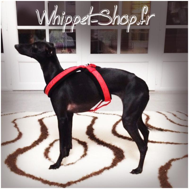 Harnais-petit-lévrier-italien-Harnais italian-greyhound-Harnais lévrier-harnais-whippet-galgo-podenco-whippet-shop-fr