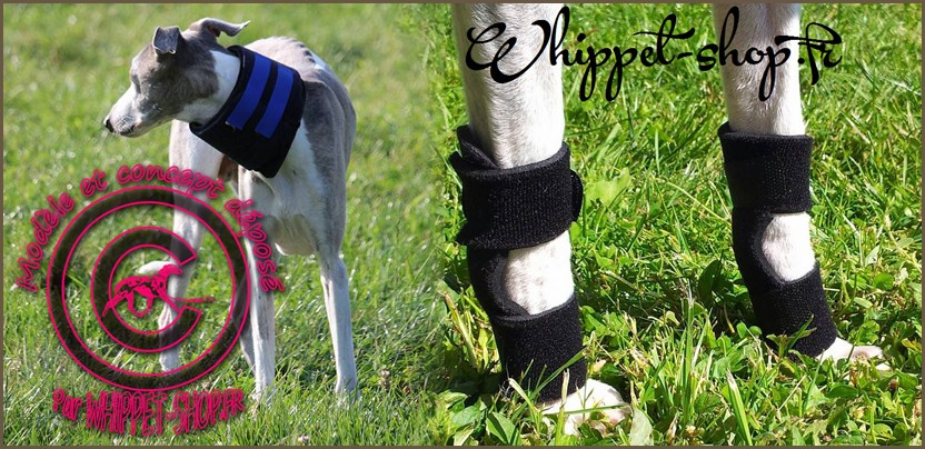 Protection-whippet-shop-fr